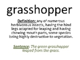 Complete Spelling Bee PowerPoint