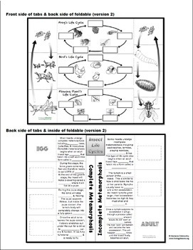Complete and Incomplete Metamorphosis Foldable: Life Cycles Lesson