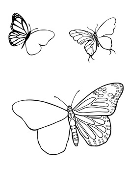 Complete the Butterfly Symmetry Worksheet