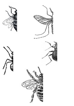 Complete the Missing Half of the Insects!