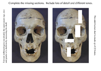 Complete the Missing Sections of Skull!