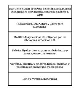 Componentes de la célula animal y vegetal