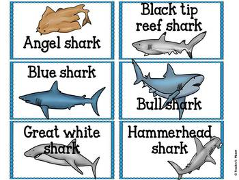 Compound Word Games - Shark Shake Up!
