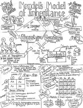 Comprehensive Genetics PBL UNIT!! Incl Sketch Notes,Teacher's Guide,PPTs,&Quiz!