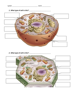 Comprehensive Plant and Animal Cell packet