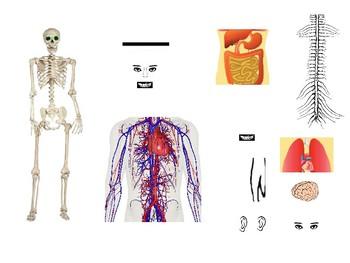 Computer parts like human body parts!