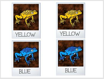 Concentration Tree Frog Selfies Learning Colors