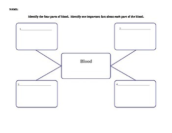 Blood Concept Map Worksheet Answers