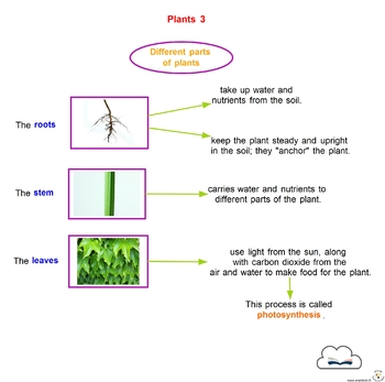 Concept Maps Science Plants By Notebooks In The Clouds Tpt