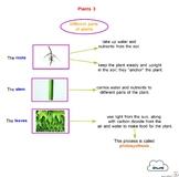 Concept Maps - Science - Plants
