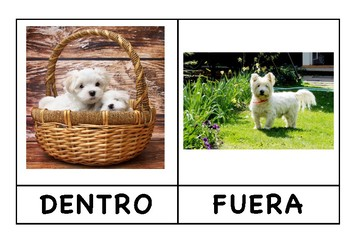 Animales: Conceptos Matemáticos