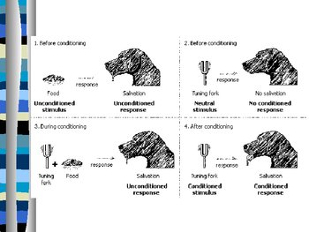 Conditioned Learning: Operant and Classical Conditioning