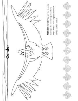 Condor Coloring Page (From Animals or The Andes)