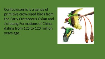 Confucisornis the winged emperor of china