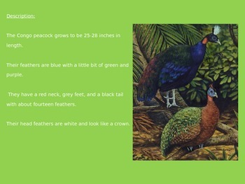 Congo Peacock Peafowl - Power Point Information Pictures Facts