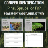 Conifer Evergreen Presentation & Student Activity with Han