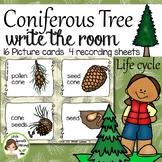 Coniferous (Christmas) Tree Write the Room
