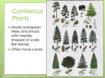 Coniferous, Deciduous, Annual, and Perennial Plants