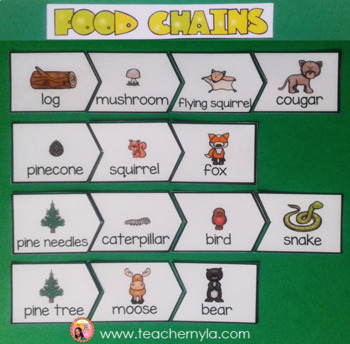 Coniferous Forest Food Chain Puzzles