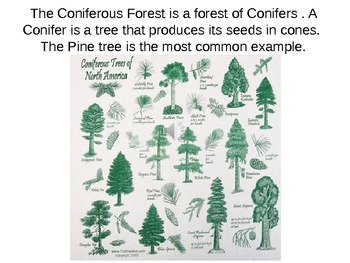 Coniferous Forest PowerPoint