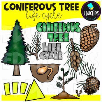 Coniferous Tree Life Cycle Clip Art Bundle {Educlips Clipart}