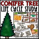 Coniferous Tree Life Cycle Unit