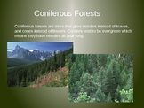Coniferous and Deciduous Trees PowerPoint