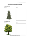 Coniferous vs. Deciduous Trees