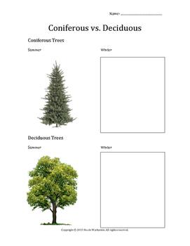Coniferous vs. Deciduous Trees