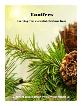 Conifers - A student investigation using discarded Christmas Trees