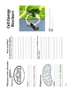 Connecting photosynthesis and respiration: Brochure activity