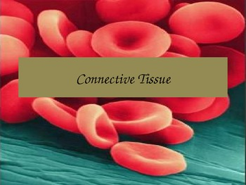 Connective Tissue