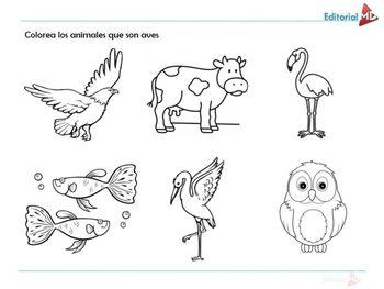 Conociendo Algunas Aves