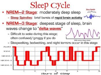 Consciousness and Sleep PowerPoint
