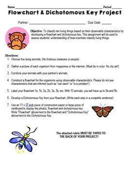 Dichotomous Key and Flowchart Lesson and Project