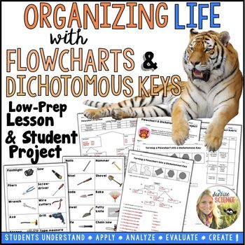Dichotomous Key And Flowchart Lesson And Project By Sunrise Science