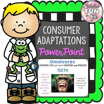Consumer Adaptations PowerPoint and Foldable
