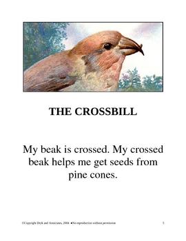 Context Clues:  Bird Beak Match  (English and Spanish)