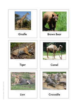 Continent Animal Cards, Africa