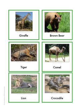 Continent Animal Cards, Africa (colored border)