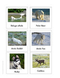 Continent Animal Cards, Arctic