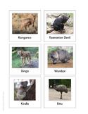 Continent Animal Cards, Australia