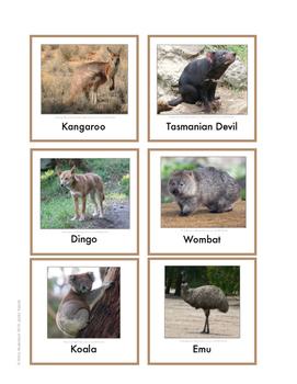 Continent Animal Cards, Australia (colored border)
