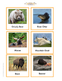 Continent Animal Cards Bundle 1