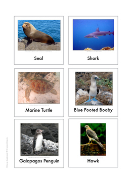 Continent Animal Cards, Galapagos