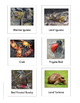 Continent Animal Cards, Galapagos