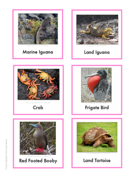 Continent Animal Cards, Galapagos (colored border)