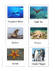 Continent Animal Cards, Ocean