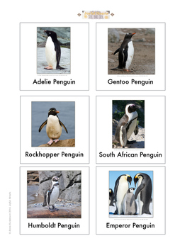 Continent Animal Cards, Penguins (colored border)