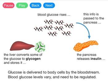 Controlling Blood Glucose (Video)